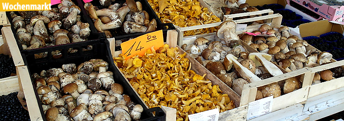 Das Bild zeigt eine Auswahl an Pilzen der Region